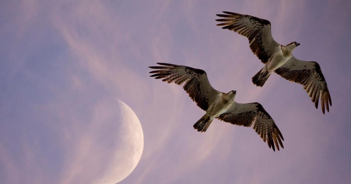 lidojums augstumā